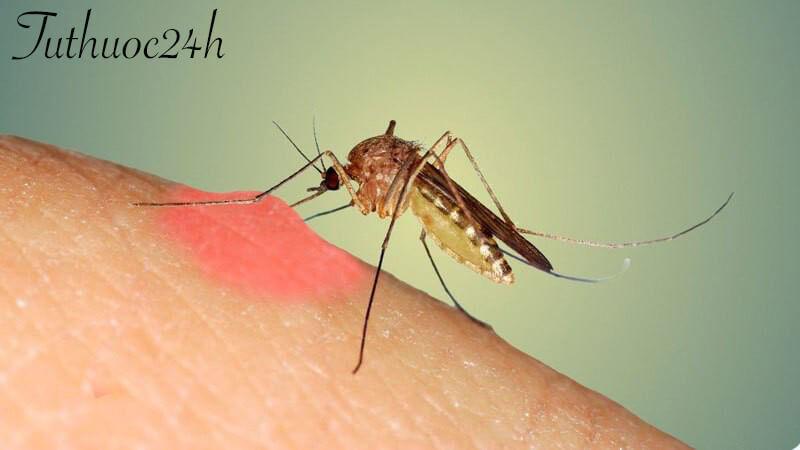 Bệnh nhân khi bị sốt xuất huyết nên ăn gì và kiêng ăn gì?