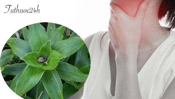 Giới thiệu cách chữa viêm họng hạt bằng thuốc dân gian tại nhà