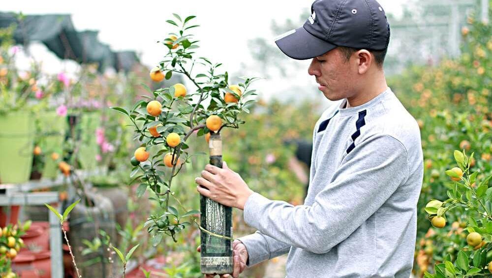 Độc đáo cây quất tí hon trồng trong chai thủy tinh trị giá triệu đồng dịp Tết