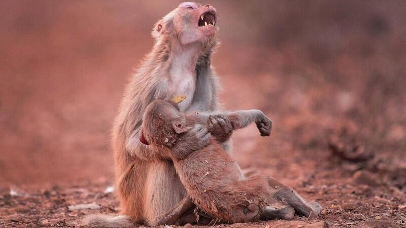 Động vật có biết đau đớn?