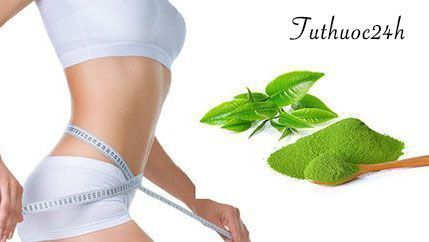 Giảm cân nhanh chóng cùng với bột trà xanh