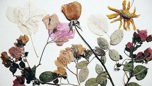 Hô biến hoa tươi thành hoa khô vô cùng đơn giản