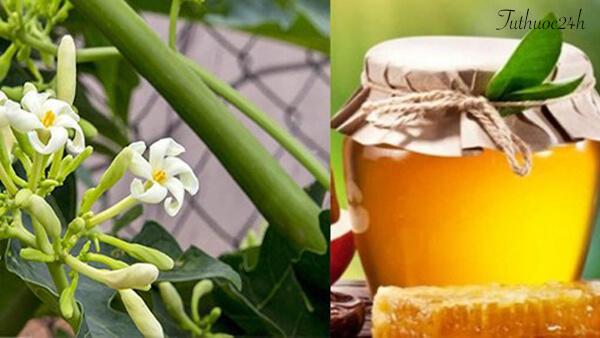 Chữa ho bằng hoa đu đủ đực cho trẻ em đơn giản và hiệu quả