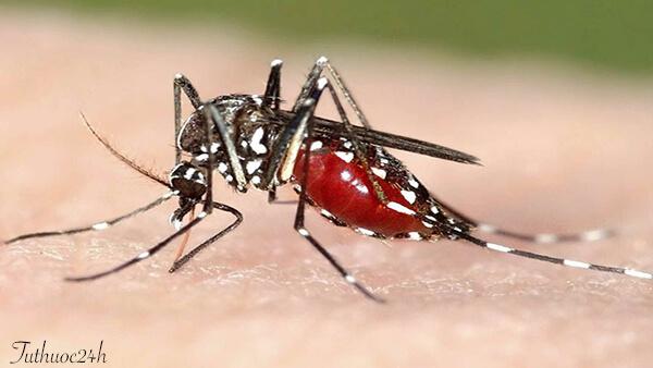Những mẹo đuổi muỗi trong nhà hiệu quả mà vô cùng an toàn