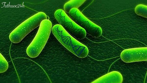 Nhiễm vi khuẩn HP ở trẻ em - Những dấu hiệu nhận biết và cách điều trị