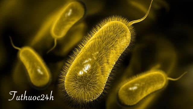 Vi khuẩn HP và những thông tin bạn cần phải biết